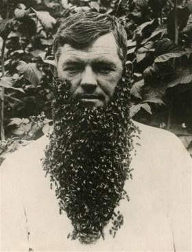 beard-of-bees