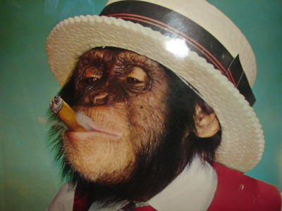 monkey smoking