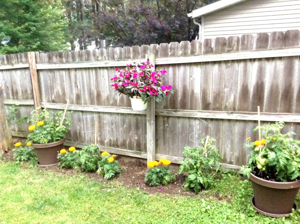The garden my wife put together. Just tomato plants and some marigolds to start.